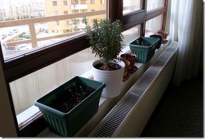 3.2.13 Plants1