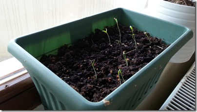 3.2.13 plants2